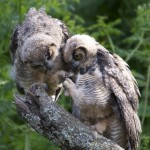 Your Daily Owls